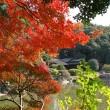 秋の庭園開放