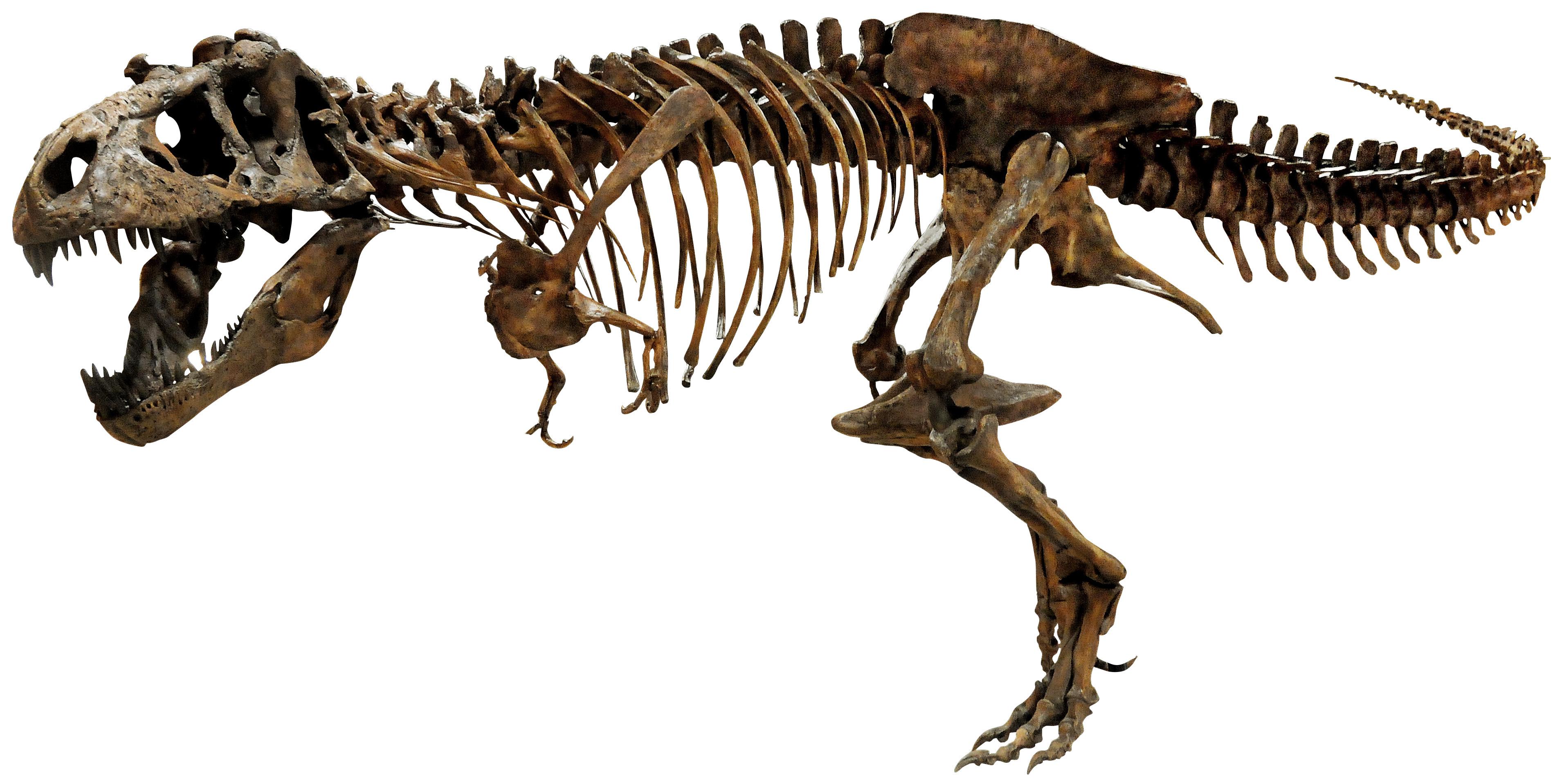 「恐竜博2016」招待券5組10名様にプレゼント