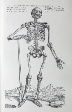①アンドレアス・ヴェサリウス『ファブリカ』2 ファクシミリ版1964年より