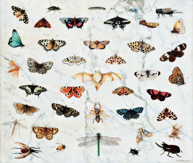 ヤン・ファン・ケッセル1世《蝶、カブトムシ、コウモリの習作》1659年 Private Collection, USA