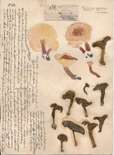 菌類図譜 所蔵:国立科学博物館