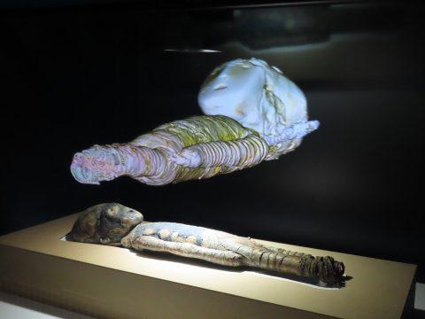 ミイラ 展 国立 科学 博物館